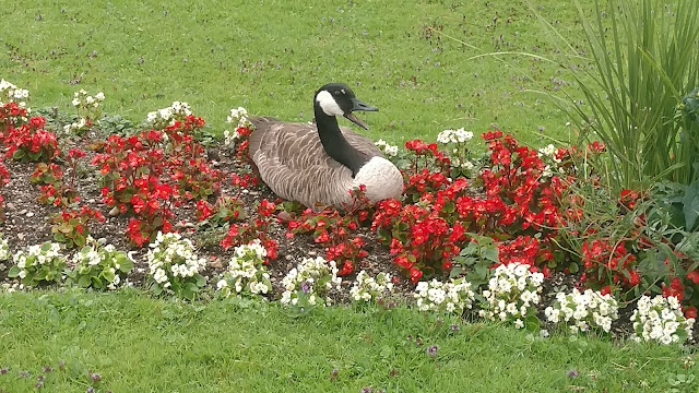 Goose @ Nymphenburg Palace