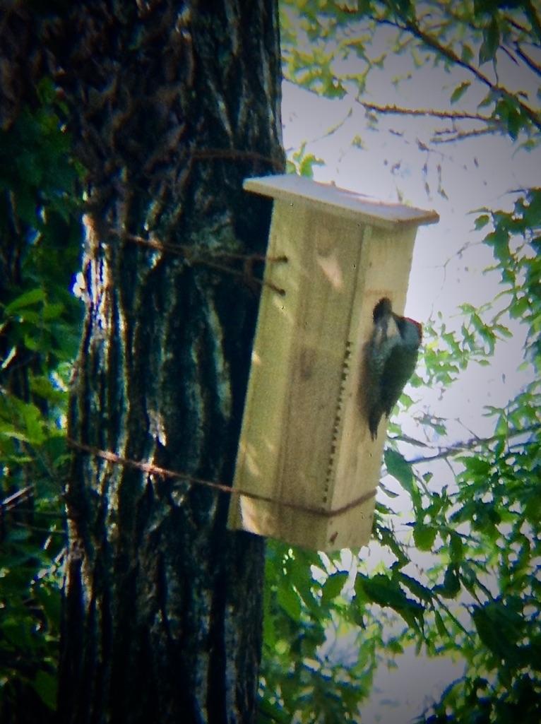 巣箱と野鳥