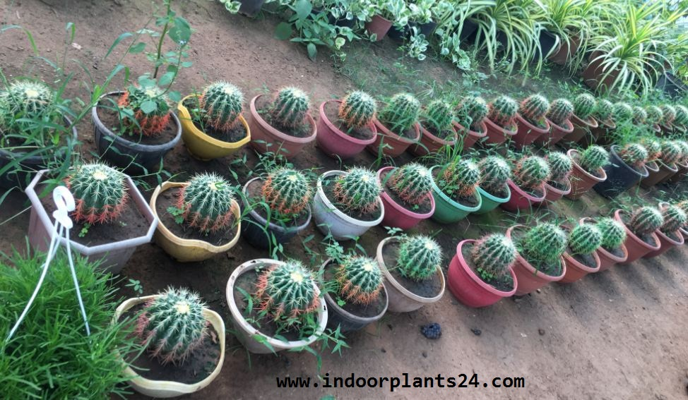 beauteous house plants names. Green Indoor Plants Names And Pictures Images Photos 2017 With  Interior Design Ideas