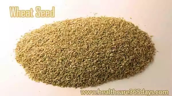 wheat-seed-is-also-a-natural-immune-booster