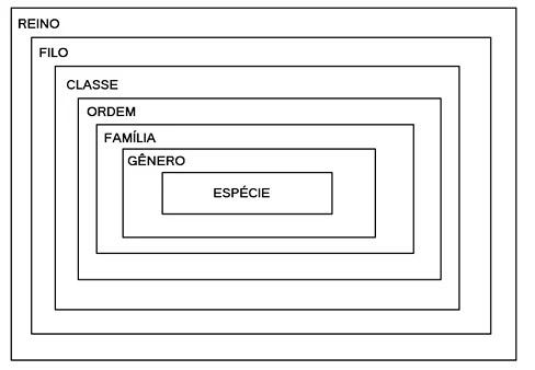 Lineu e as classificações dos seres vivos