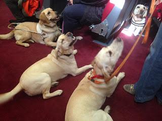 Σκύλοι οδηγοί στην αίθουσα του ΚΕΑΤ