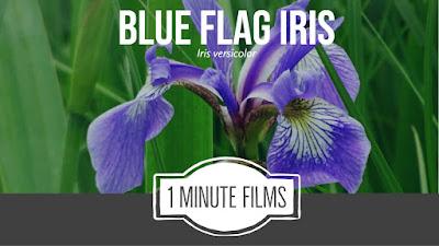 Wildflower Film