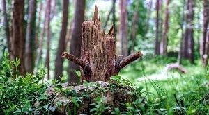 Faktor abiotik mekanik penyebab kerusakan hutan terdiri dari angin, bencana alam, es/salju, kebakaran hutan, dan petir.