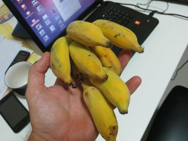 Связка бананов в руке