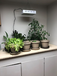Countertop in basement with six plants and a grow light