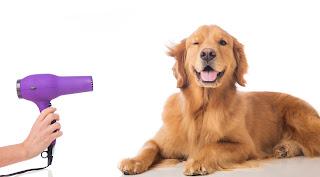 Oferta de Trabajo en Cali -Venta y Atencion al cliente Tienda de Mascotas