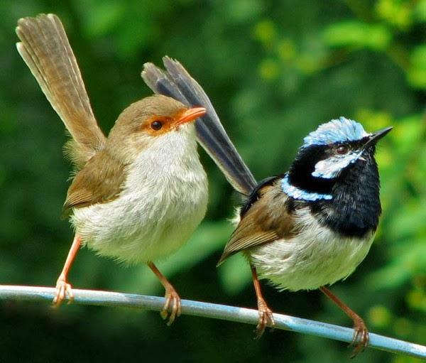 7 Wonders Of The World: Birds Hd Wallpaper Free Download