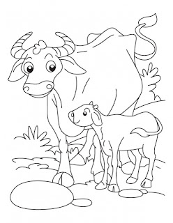 baby buffalo coloring pages | Animals And Their Young Ones | Kids coloring pages