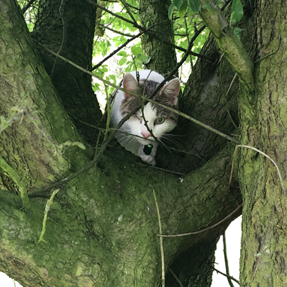 tabby-and-white cat in a tree
