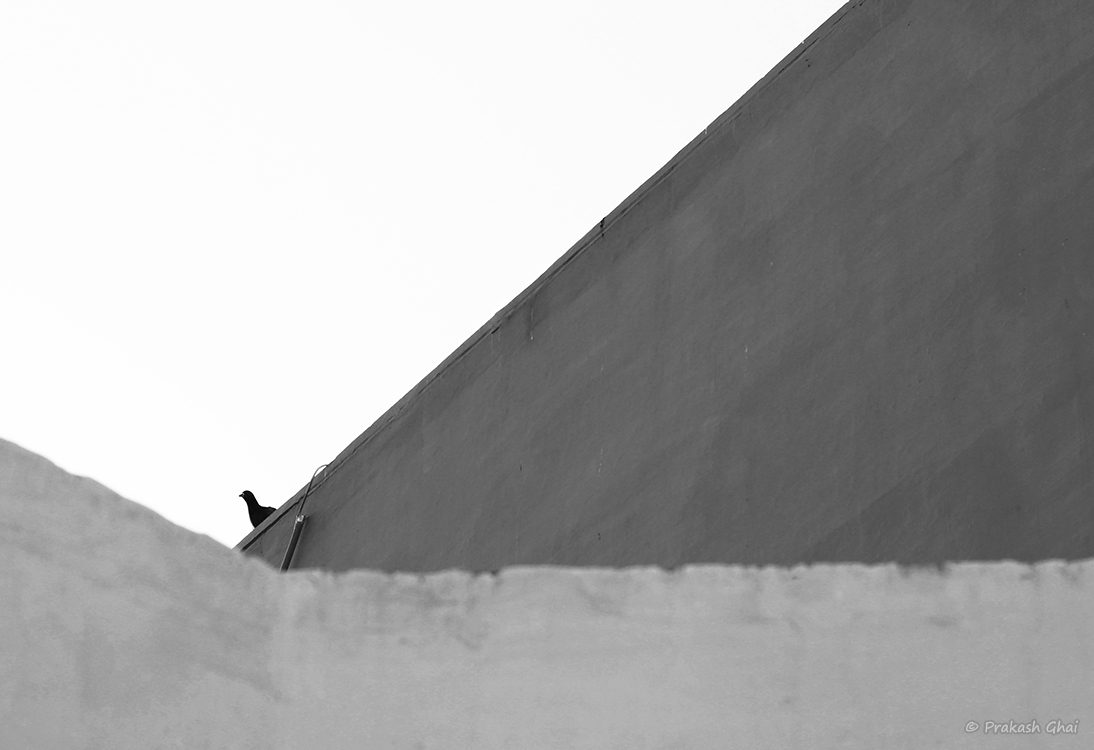 A black and white Minimalist Photo of a small Bird sitting on the wall.