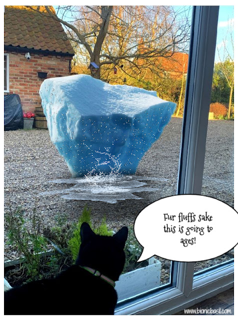 Parsley and The Iceberg ©BionicBasil® The Pet Parade 341