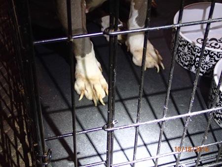 Salem Nh Dog Kennels