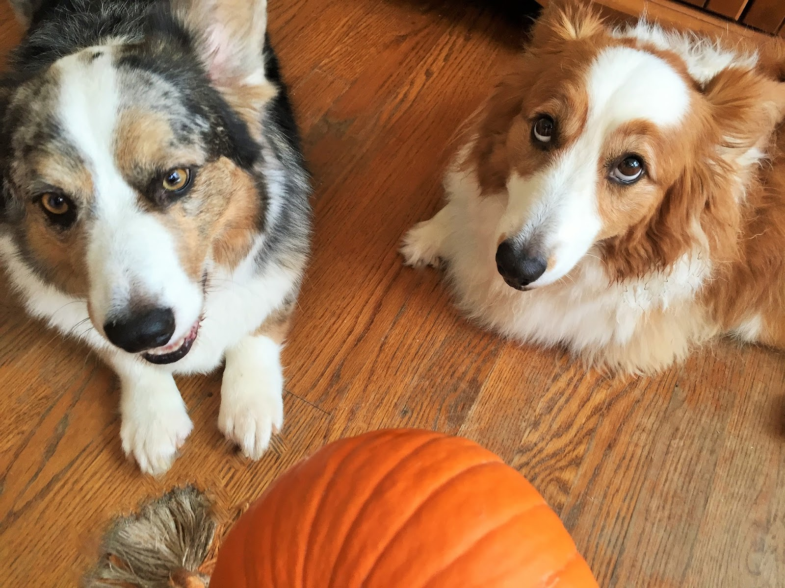 Image Result For Thanksgiving Food Dogs