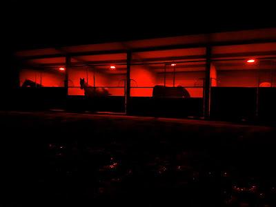 Utilisation de lumière rouge pour les chevaux