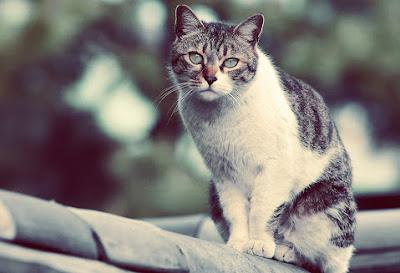 Almanyadaki Yaşlılar-Çatıdaki Kedi