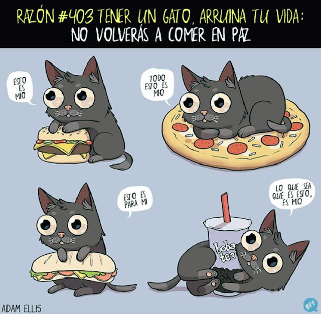 Humor gatos comida