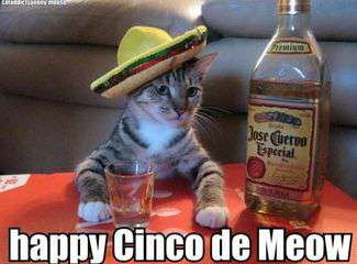 Cinco de Mayo Wishes Pics