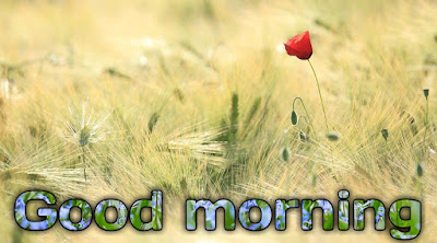 Latest new good morning flower images