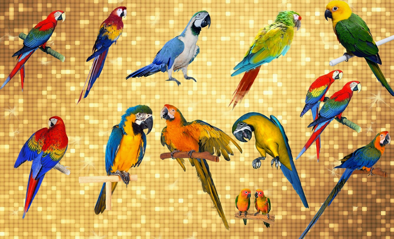 Nice Parrot png Collection