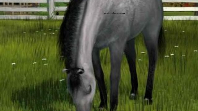 Pony-Friends-2-PC-Game-Free-Download