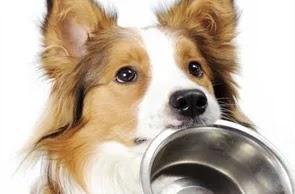 Cães e gatos não transmitem covid-19, afirma estudo da PUC-PR