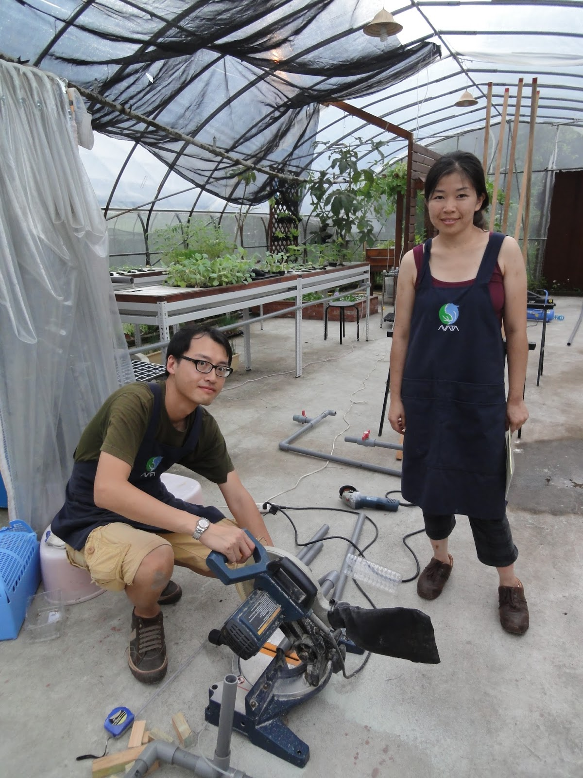 AVATA魚菜共生/Aquaponics Taiwan: 銀葉粉蝨