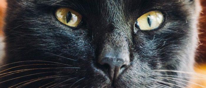 القطط السوداء وعلاقتها بالجن وهل هي نذير شؤم