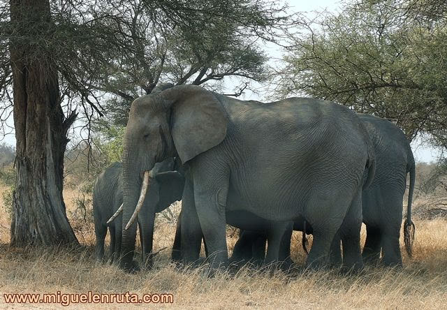 Manada-elefantes-Kruger