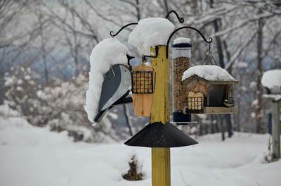 Photo of bird feeder covered in snow. Daniela Vaskova. Pixabay.