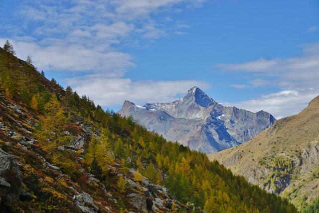 forêt de mélèzes aux aiguilles jaunies par l'automne, grand paradis, aoste, italie