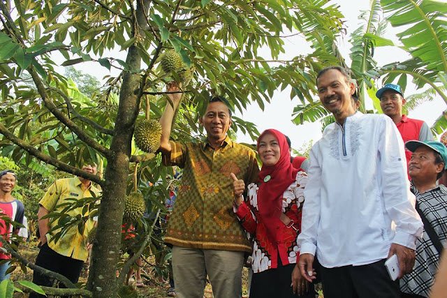 Durian Cangkring Siap Dipanen Awal Tahun Depan