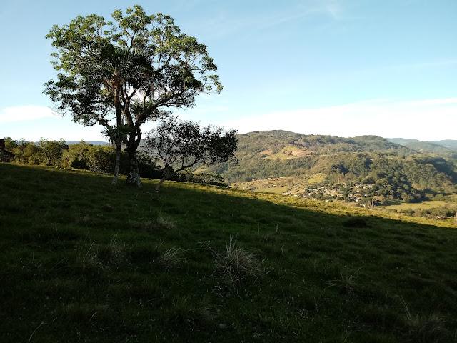 A foto mostra uma bela árvore  nos campo gaúchos de conservação ambiental.