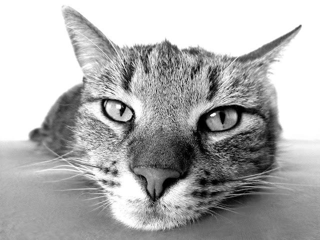Conseils pour présenter votre nouveau bébé au chat chaton  chatons chats chatonne un petit chat chatonne un petit chaton paruvendu chaton petit chat chat calin chaton calin maison chaton nourriture chat persan  alimentation chat persan  josera chat  premium croquette chat  equilibre et instinct chat   ultima poulet   ultima saumon  croquettes equilibre et instinct  ultima systeme urinaire  ultima appétit difficile  ultima sterilisé