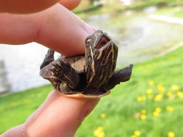 tartaruga feliz