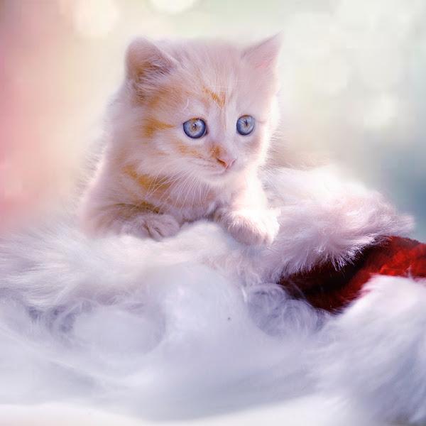 Hari Kucing Sedunia - Setahun kami bersama Uning dan Nina #FBBKolaborasi