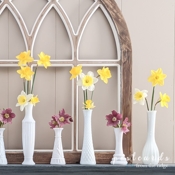 vintage white milk glass vases with pink Lenten roses and yellow daffodils