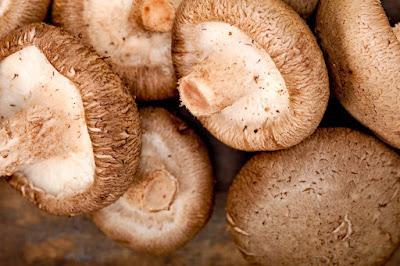 Shittake Mushroom Trainings