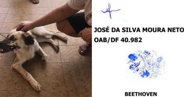 Cachorro move ação judicial contra agressor e 'assina' processo com digital da própria pata, no Ceará