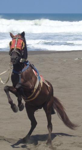 Kuda Berdiri di Pantai