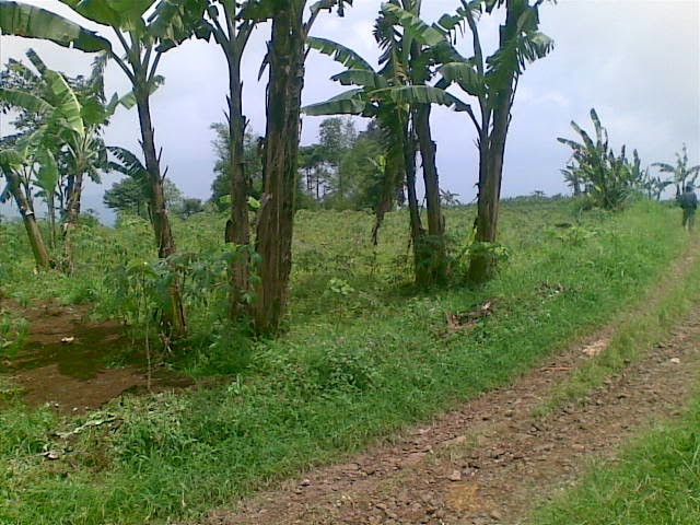 Foto(5224) Jual Tanah luas 25 Ha, Lokasi Cipanas-sukaresmi Jual tanah di cipanas jual tanah di puncak jual tanah di taman bunga nusantara