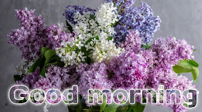 Happy Sunday images with flowers morning wishes with flowers