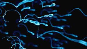 Sperm- تجميد البويضات - تجميد الحيوانات المنوية