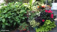 Anne's garden overview - Stratford, CT