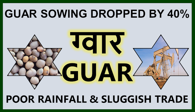 Guar sowing area has decreased by 40% in comparison to previous year. ,  Guar, guar gum, guar price, guar gum price, guar demand, guar gum demand, guar seed production, guar seed stock, guar seed consumption, guar gum cultivation, guar gum cultivation in india, Guar gum farming, guar gum export from india , guar seed export, guar gum export, guar gum farming, guar gum cultivation consultancy, today guar price, today guar gum price, ग्वार, ग्वार गम, ग्वार मांग, ग्वार गम निर्यात 2018-2019, ग्वार गम निर्यात -2019, ग्वार उत्पादन, ग्वार कीमत, ग्वार गम मांग, Guar Gum, Guar seed, guar , guar gum, guar gum export from india, guar gum export to USA, guar demand USA, guar future price, guar future demand, guar production 2019, guar gum demand 2019, guar, guar gum, cluster beans, guar gum powder, guar gum price, guar gum uses, ncdex guar, guar price, guar gum price today, cyamopsis tetragonoloba, ncdex guar gum price, guar beans, guar rate today