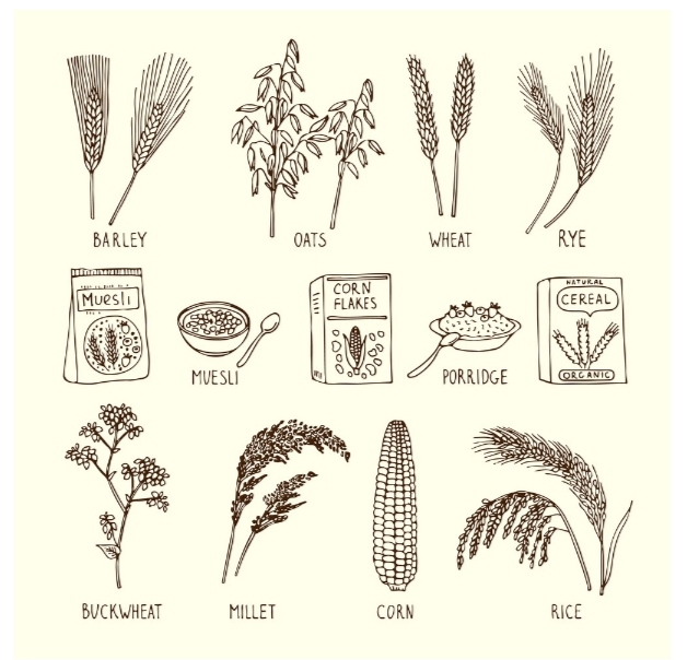 Food commodity | cereals