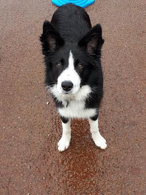 eduquer chien annecy thones faverges