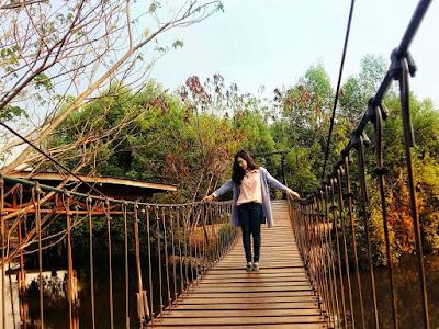Hutan Mangrove PIK Jembatan