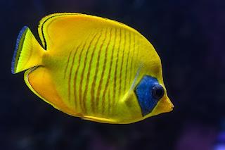 8 Ayat Al-Quran Tentang Ikan