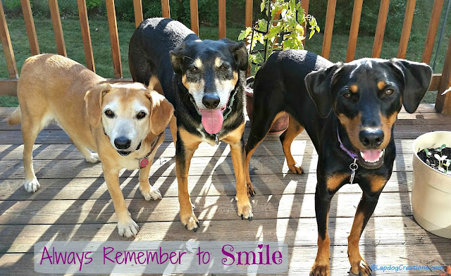 3 happy rescue dogs smiling